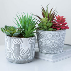 Succulent Plant in Cement Pot